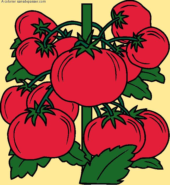 Coloriage pied de tomates sans d passer - Tomate dessin ...