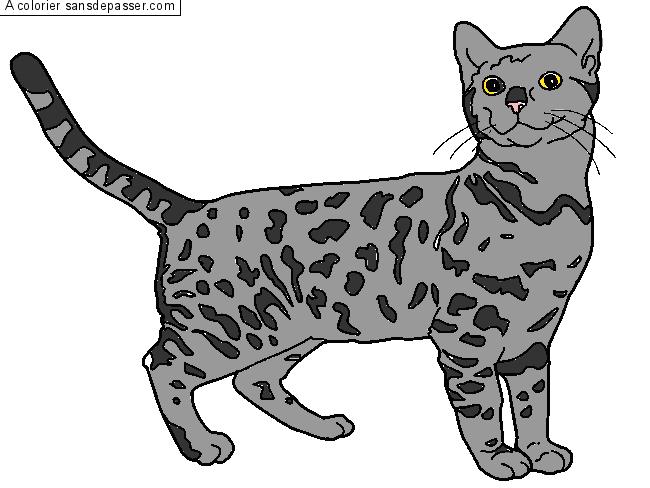 Coloriage chat bengal sans d passer - Coloriage de chat en ligne ...