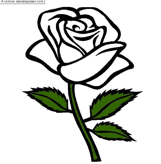 Coloriage Rose Rouge Sans Depasser