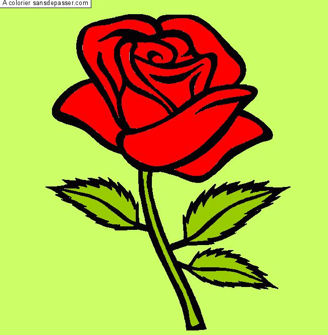 Coloriage rose rouge sans d passer - Dessin de rosier ...
