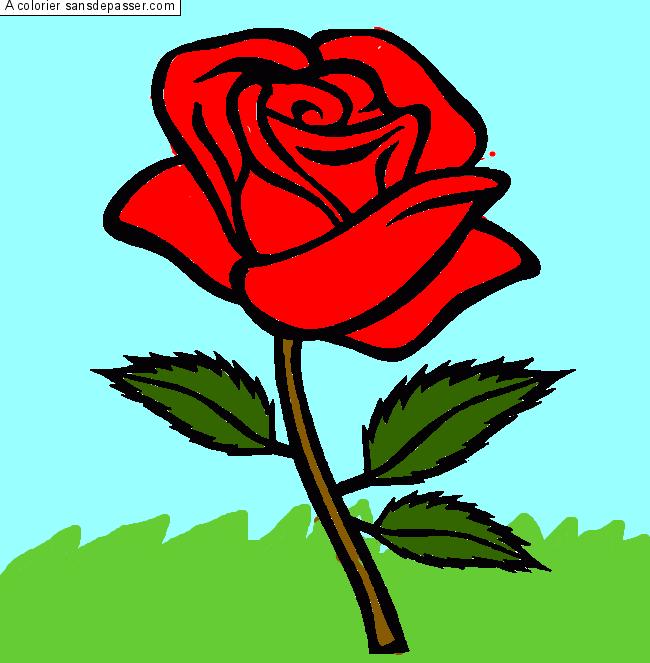 Coloriage rose rouge sans d passer - Dessin de rose rouge ...