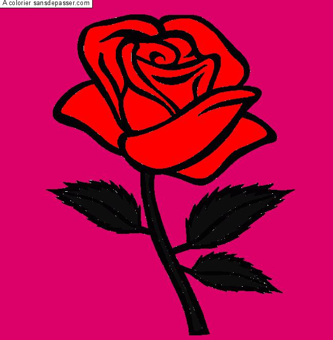 Dessin Colorie Rose Rouge Par Un Invite Sans Depasser