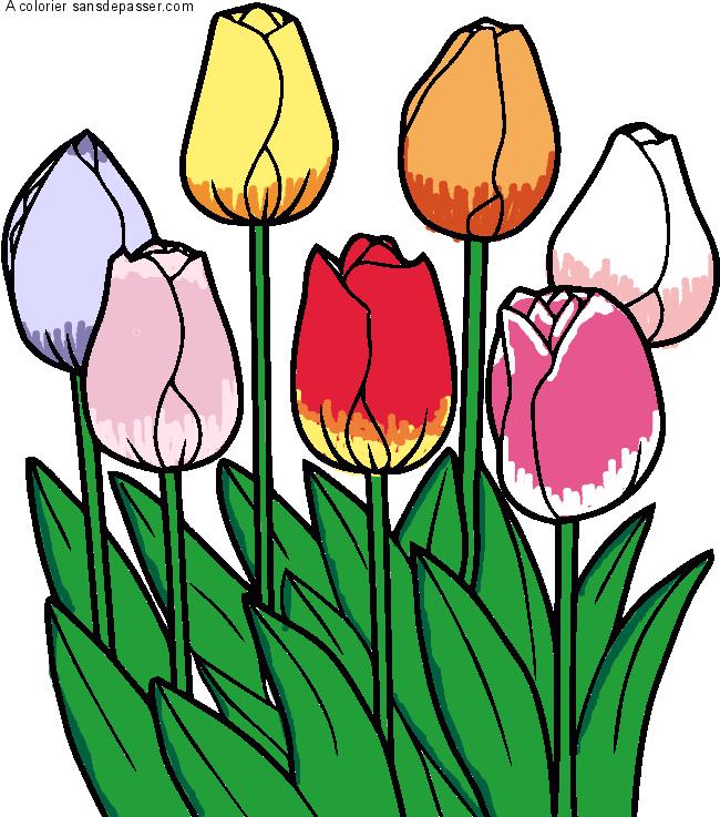 Dessin colorié : Tulipes par Louis - Sans Dépasser