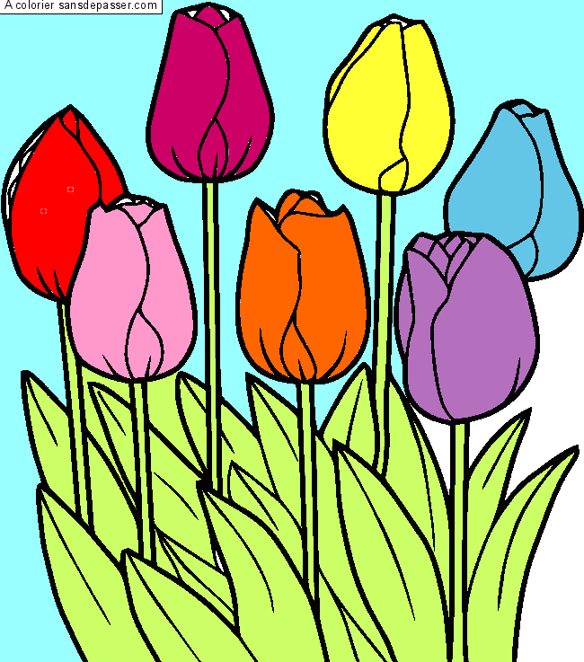 Coloriage Tulipes par un invité