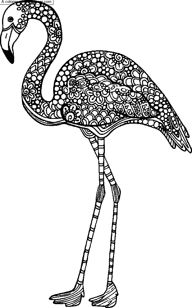 Coloriage Flamant rose - Mandala par un invité