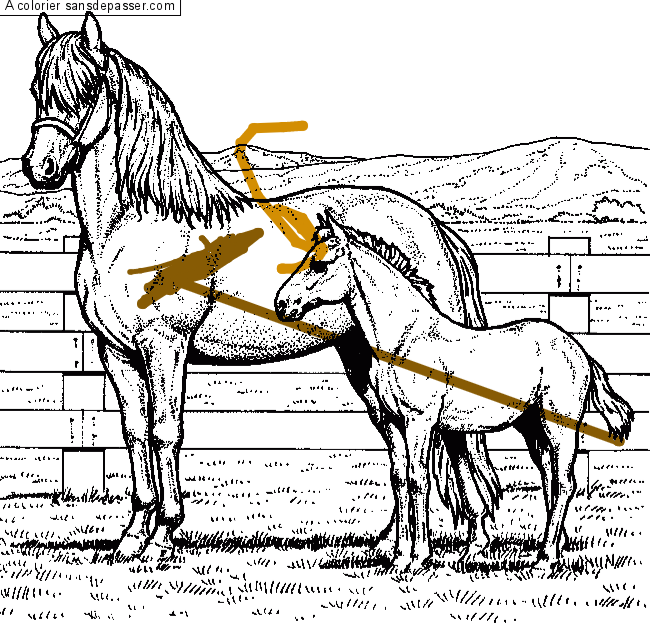 Coloriage une jument et son poulain sans d passer - Coloriage cheval et poulain ...